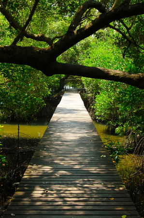 nusa: Path in Mangrove forest