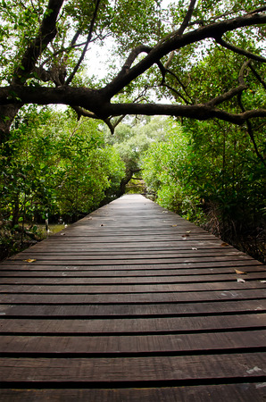 kuta: Path in Mangrove forest