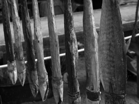 lang: Fish is being sundried in Ko Phitak Island, Lang Suan district, Chumphon, Thailand