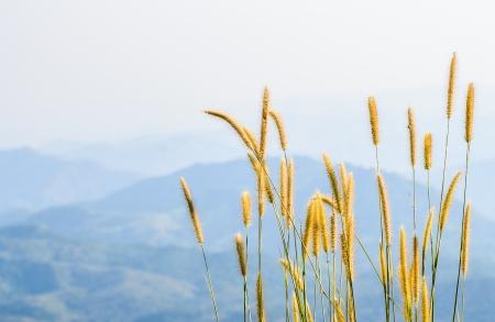 grass in wind against a blue sky photo