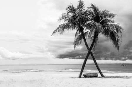 white  beach: Black & White view of Beautiful beach with palms, Thailand