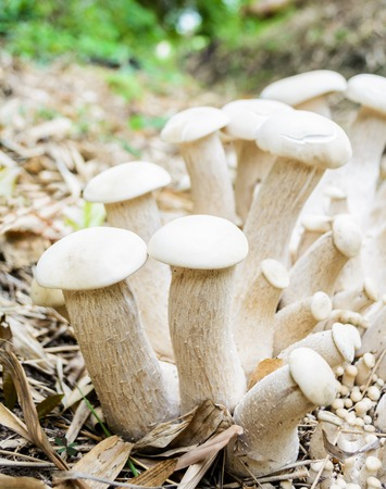 spores: Mushrooms in naturally, Thailand