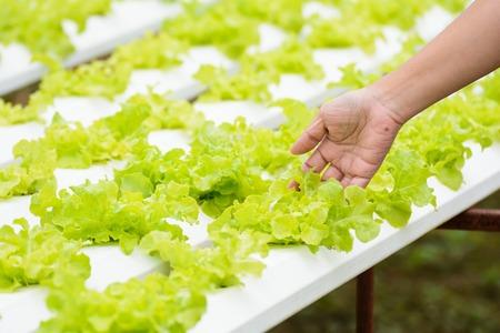 raíz de planta: asimiento de la mano de verduras