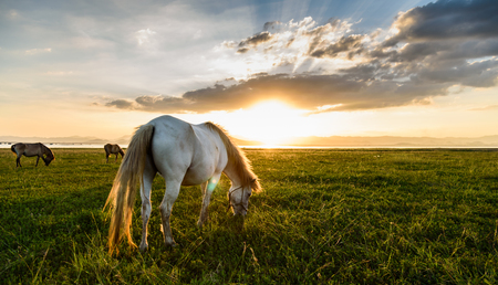 Horse on pasture at November evening near sunset