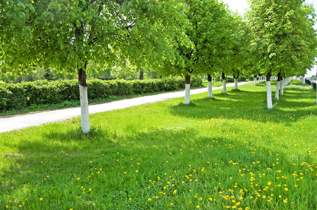 Green lawn in a frame of trees