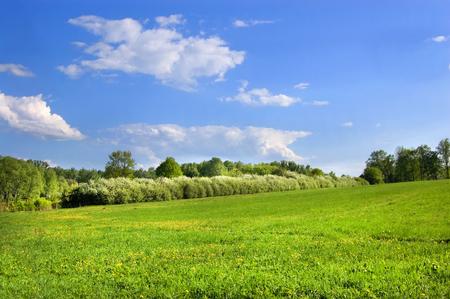 녹색 필드와 흰 구름과 푸른 하늘 아래 숲 스톡 콘텐츠