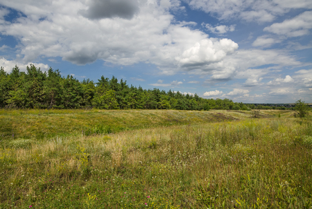 A field with thick grass and a forest in the distance, lit by the summer sun Stock Photo