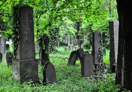 withering: aging headstones at a withering section of viennas central cemetary