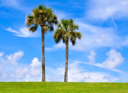 two palm trees against blue sky photo