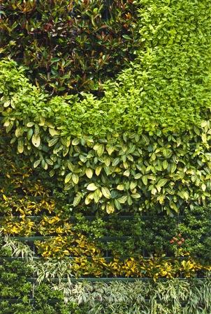 arrangement of ornamental plant photo