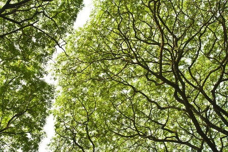 inhibition: a nature of growing of some big and old tree