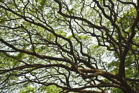 nature design of a big and old tree Stock Photo