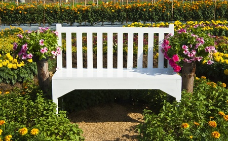 white bench in flowers garden  photo