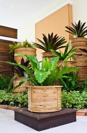 indoor fern garden for room corner decoration Stock Photo