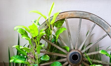 rueda de carreta antigua, con plantas ornamentales para el jard�n de la decoraci�n Foto de archivo - 14480610