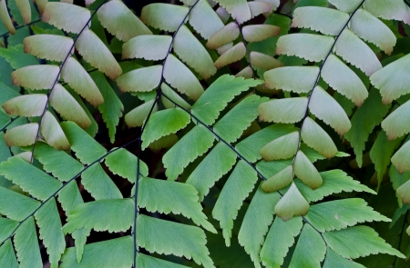 fern leaf background photo
