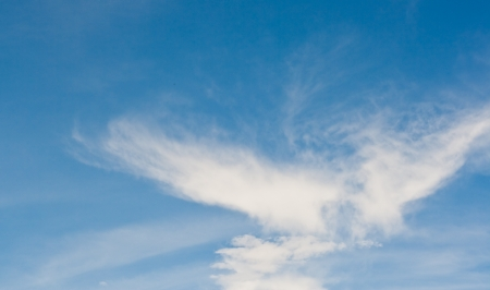 seem: white cloud seem like white eagle in blue sky