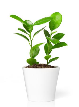 plant in pot: Plant in pot