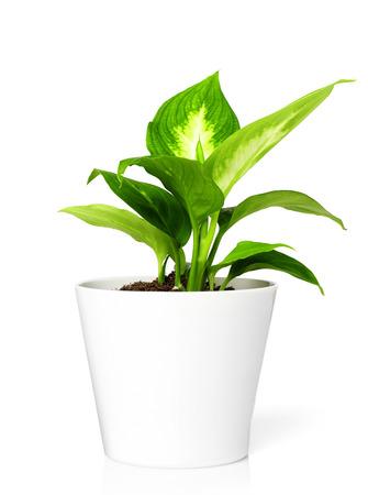flower pot: Plant in pot