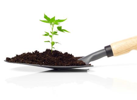 seedling: Seedling