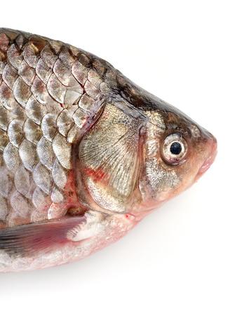 fish head: Fish head Stock Photo