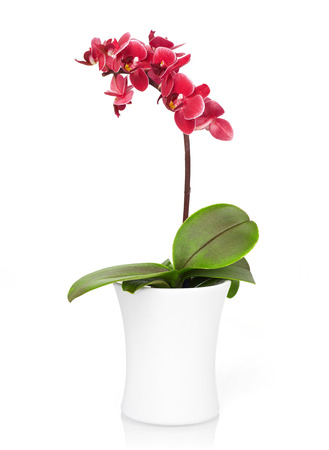 spa flower: Orchid in a small pot