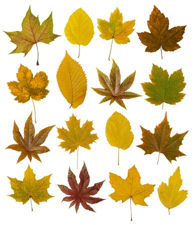 autumn leafs: Autumn leafs Stock Photo