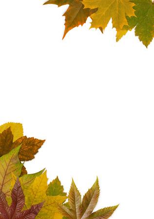 autumn leafs: Autumn leafs frame