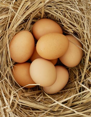 free range: Free range eggs Stock Photo