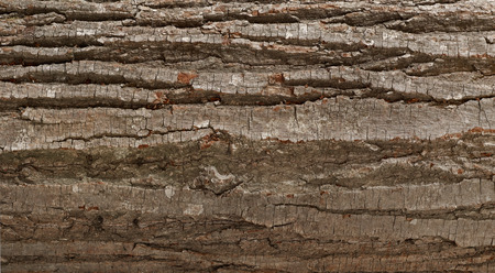 bark background: Tree bark background Stock Photo