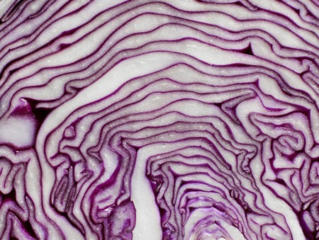 macrophotography: Red cabbage texture