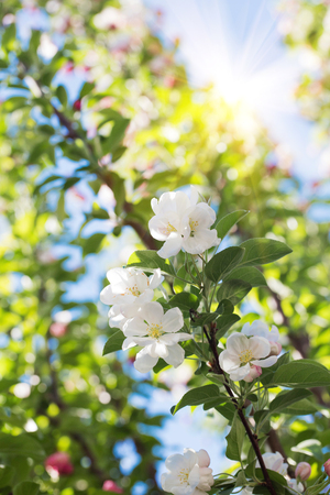 Beautiful blossom flower