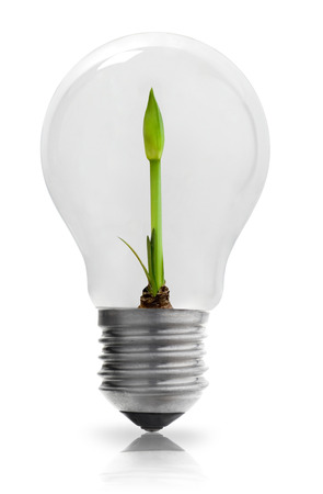 electric material: Light bulb with growing  plant Stock Photo