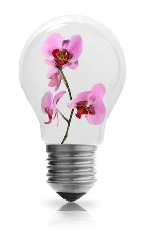 filament: Light bulb with orchid Stock Photo