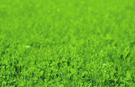 Fresh grass field Stock Photo