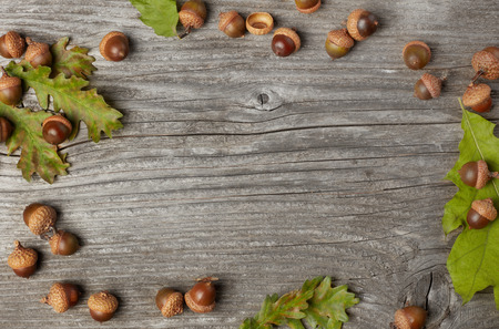 Acorns frame from above