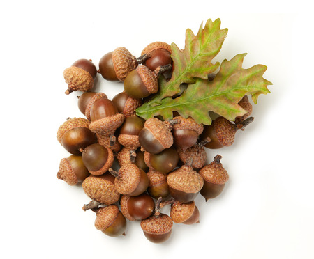 A bunch of acorns and leafs
