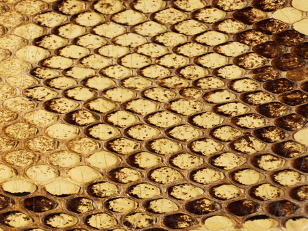 Snake leather texture Stock Photo