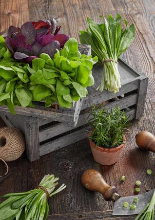 Herb leafs on wood table Zdjęcie Seryjne