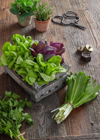 Fresh kitchen herbs 版權商用圖片