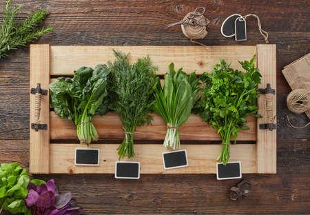 Various fresh green kitchen herbs Standard-Bild