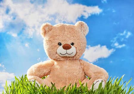 Teddy bear in the grass