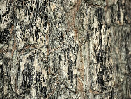 Brown bark bark texture image for a natural background