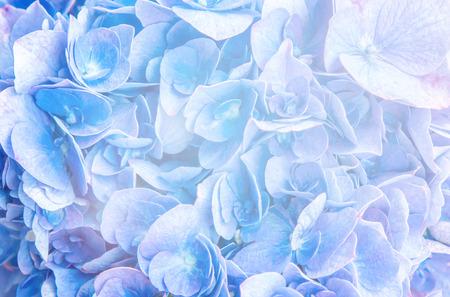 flowers background. Reklamní fotografie