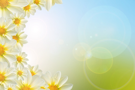morning sunrise: white flower in nature background.
