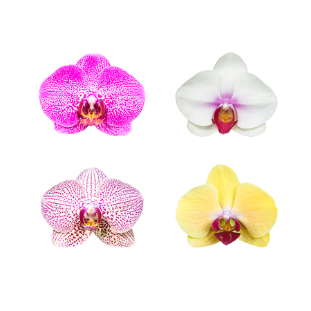Collection of orchid flower isolated on white Reklamní fotografie
