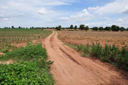 s curve road in cassava field