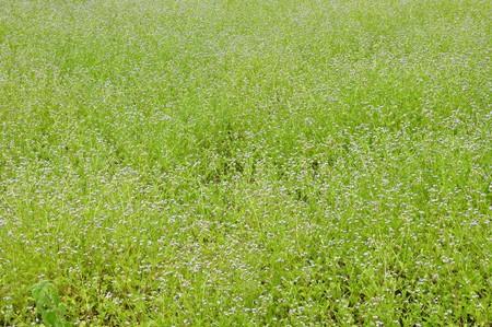 grass field background photo