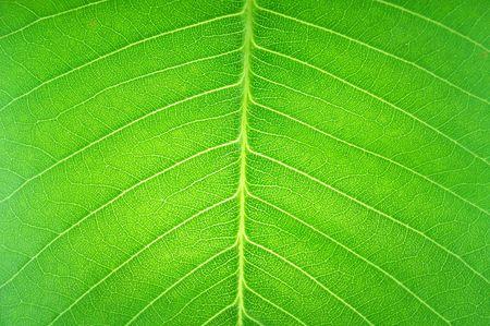 textuur oppervlak in transparante leaf
