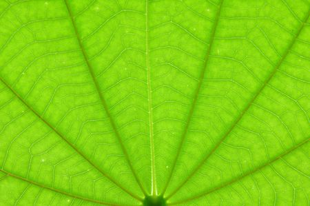 Transparent leaf texture background photo